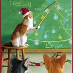 Kitty Christmas 101